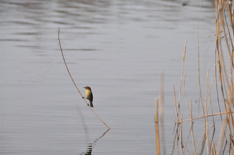 oiseau à la pêche