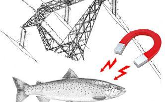 haute-tension et poisson
