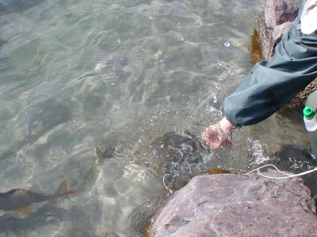pêche à la mouche en Autriche