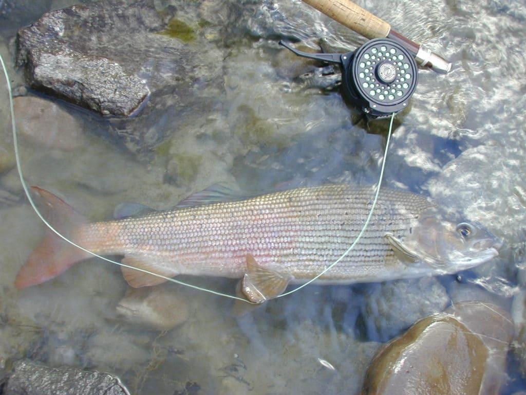 Pêche de l'ombre en Autriche